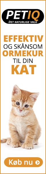 ormekur til katte tyskland